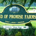 Land of Promise Farms 2nd Annual Winter Club Pig Sale – Saturday, January 18, 2014