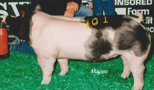 Hunter McMillen with the Sixth in Class Winner at the 2013 North American International Livestock Exposition