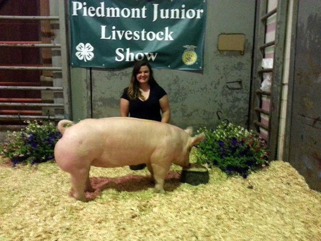 The Grand Champion Market Hog at the 2014 Piedmont Junior Livestock Show shown by Sarah Jane French