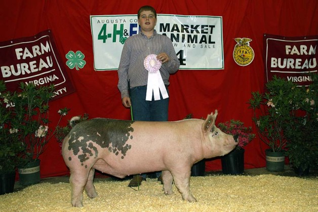 The Reserve Champion (Division 4) at the 2014 Augusta Market Animal Show shown by Zach McCall