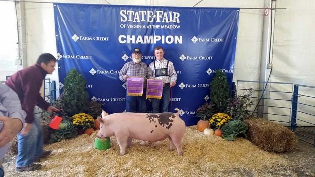 Champion Show Pigs