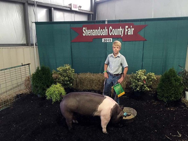 Tyler Bushong with the Reserve Champion Light Weight at the 2015 Shenandoah, VA 4-H Livestock Show