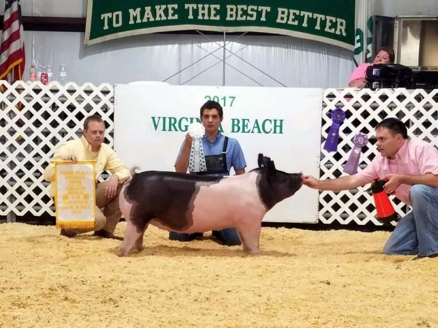 Dawson Cox with the 3rd Overall Hog at the 2017 Virgina Beach, VA Livestock Show
