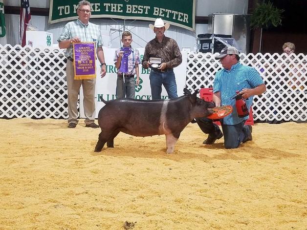 Austin Cox with the Grand Champion at the 2018 Virgina Beach, VA 4-H Livestock Show