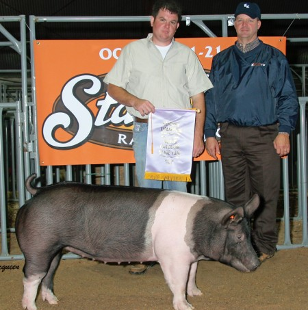 The Reserve Champion Gilt in the Open Show at the 2012 NC State Fair
