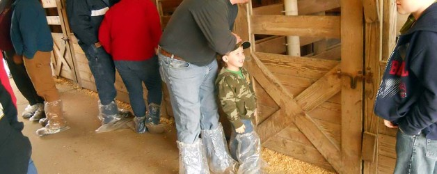 Pictures of the January 12, 2013 Show Pigs Sale