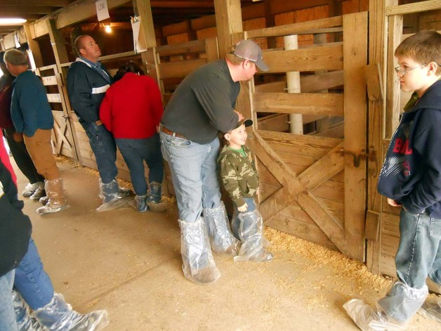 Show Pigs Sale Day – January 12, 2013